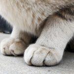 足の構造を知ることでリハビリを効果的に